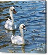 Swan Day Canvas Print