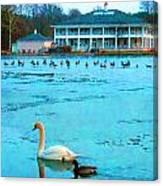 Swan Duck Geese Canvas Print