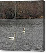 Swan Lake 2 Canvas Print