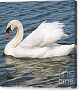 Swan On Blue Waves With Border Canvas Print