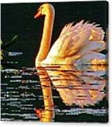 Swan On Rockland Lake Canvas Print