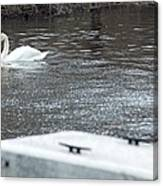 Swan On The Water Canvas Print