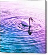 Swan Ripples Canvas Print