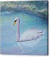 Swan Study Canvas Print