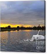 Swan Taking Off Canvas Print