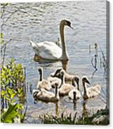 Swan With Signets 2 Canvas Print
