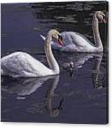 Swans And Signet Canvas Print