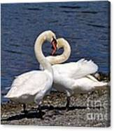 Swans Courting Canvas Print