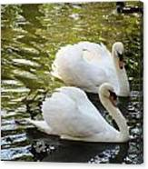 Swans In Love Canvas Print