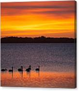 Swans In The Sunrise Canvas Print