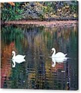 Swans At Betty Allen Canvas Print