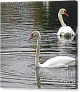 Swans On The Lake - Limited Edition Canvas Print