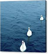 Swans On The Vltava River, Prague Canvas Print