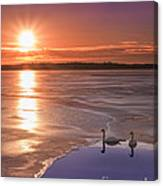 Swans Sunrise Canvas Print