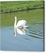 Swany Reflection Canvas Print