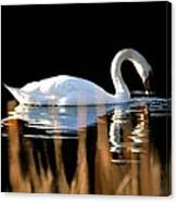 Swan River Canvas Print