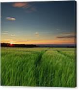 Swaying Barley At Sunset Canvas Print