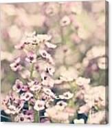 Sweet Alyssum Canvas Print