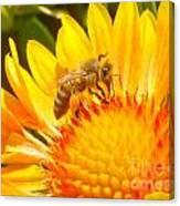 Sweet Bee Canvas Print