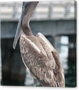 Sweet Brown Pelican - Digital Painting Canvas Print