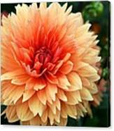 Sweet Dahlia Canvas Print