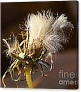 Sweet Dandelions Iv Canvas Print