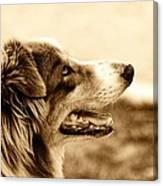 Sweet Doggie Canvas Print