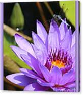 Sweet Dragonfly On Purple Water Lily Canvas Print