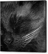 Sweet Dreams In Black And White Canvas Print