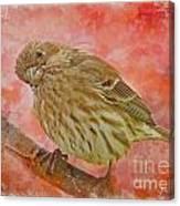 Sweet Female House Finch 3 - Digital Paint Canvas Print