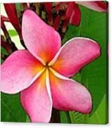 Sweet Fragrance Canvas Print