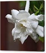 Sweet Gardenia Rain Canvas Print