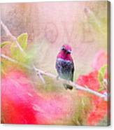 Sweet Hummingbird Love Canvas Print