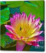 Sweet Lilly Nectar Canvas Print