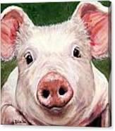 Sweet Little Piglet On Green Canvas Print