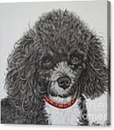 Sweet Miss Molly The Poodle Canvas Print