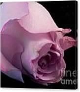 Sweet Onament -the Rose Canvas Print