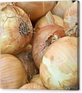 Sweet Onions Nj Grown Canvas Print