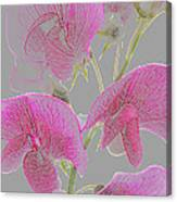 Sweet Pea Flowers Converted To Coloured Pencil Drawing Canvas Print