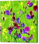 Sweet Peas Canvas Print