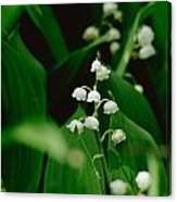 Sweet Scented Canvas Print