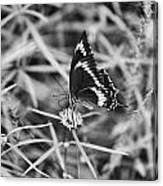 Sweet Seduction Black And White Canvas Print