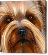 Sweet Silky Terrier Portrait Canvas Print