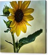 Sweet Summer Sunflower Canvas Print