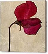 Sweet Textures Canvas Print