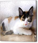 Sweet The Kitten Canvas Print