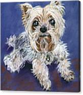 Sweet Yorkie Canvas Print