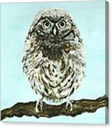 Sweetest Baby Owl Canvas Print