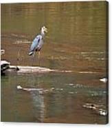 Sweetwater Creek Heron Canvas Print