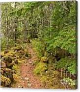 Swim Lake Trail Canvas Print